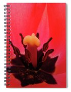 Red Tulip Art Print Inside Tulips Flowers Baslee Troutman Spiral Notebook