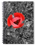 Red Tulip From Above Spiral Notebook