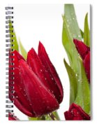 Red Tulip Heads Sprinkled Spiral Notebook
