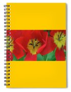Red Tulip Trio Spiral Notebook