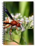 Red Wasp On Lace Spiral Notebook