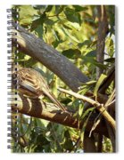 Red Wattlebird Australia Spiral Notebook