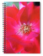 Red White Rose Spiral Notebook