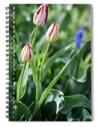 Red White Tulips Spiral Notebook