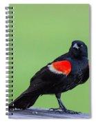 Red Wing Blackbird Spiral Notebook
