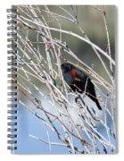 Red Winged Black Bird At Chatfield Spiral Notebook