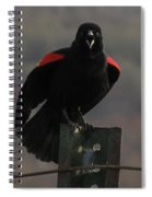 Red Winged Black Bird Spiral Notebook