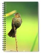 Red Winged Blackbird Female Spiral Notebook