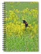 Red-winged Blackbird In Wild Mustard Spiral Notebook