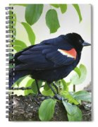 Red Winged In Montreal Spiral Notebook