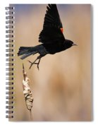 Red-winged Takeoff Spiral Notebook