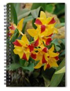 Red Yellow Orchids Spiral Notebook