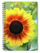 Red Yellow Sunflower Spiral Notebook