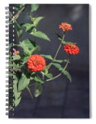 Red Zinnia Flowers Spiral Notebook