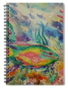 Redband Parrotfish Spiral Notebook