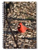 Redbird And American Golden Finch Spiral Notebook