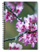 Redbud Spiral Notebook