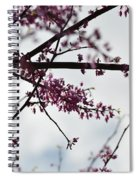 Redbuds In The Mist Spiral Notebook