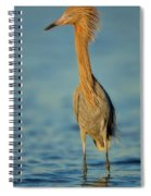 Reddish Egret Spiral Notebook