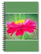 Reddish Pink Zinnia Spiral Notebook