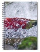Redfish  Spiral Notebook