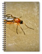 Redfly With Black Eyes Spiral Notebook