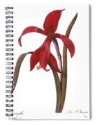 Redout�: St. James Lily Spiral Notebook