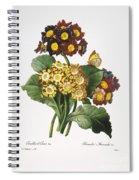 Redoute: Auricula, 1833 Spiral Notebook