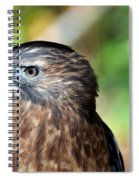 Redtail Spiral Notebook