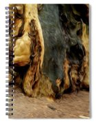 Redwood Abstract Spiral Notebook