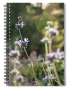 Redwood Meadow Light 2 Spiral Notebook