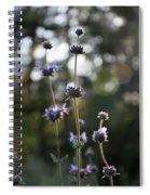 Redwood Meadow Light Spiral Notebook