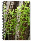 Redwood Tree Art Prints Baslee Troutman Spiral Notebook