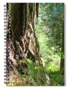 Redwood Tree Art Prints Redwoods Forest Spiral Notebook