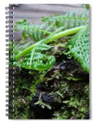Redwood Tree Forest Fern Art Prints Ferns Giclee Baslee Trouman Spiral Notebook