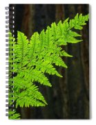 Redwood Tree Forest Ferns Art Prints Giclee Baslee Troutman Spiral Notebook