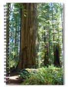 Redwood Trees Forest California Redwoods Baslee Spiral Notebook