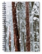 Redwoods In Snow Spiral Notebook