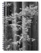Redwoods Ir 0625 Spiral Notebook