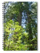 Redwoods Trees Forest Art Prints Baslee Troutman Spiral Notebook