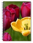 Redyellowtulips6722 Spiral Notebook