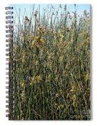 Reeds II Spiral Notebook