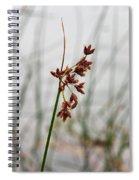 Reeds Spiral Notebook