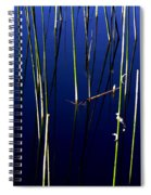 Reeds Of Reflection Spiral Notebook