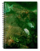 Reef Life Off Hawaii Spiral Notebook