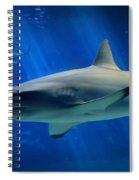 Reef Shark Spiral Notebook