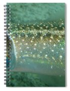 Reef Squid Spiral Notebook