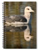 Young Gull Reflections Spiral Notebook