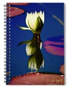 Reflection Of A Water Lily Spiral Notebook