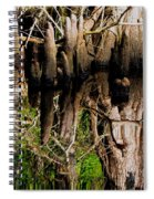Reflection Of Cypress Knees Spiral Notebook